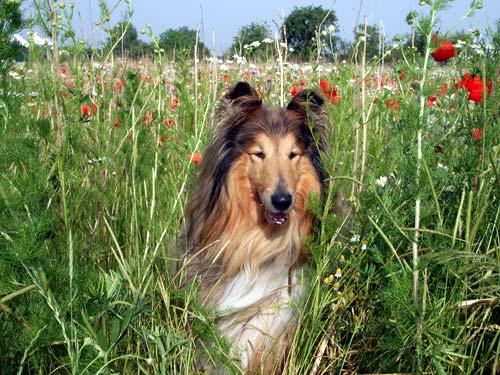 hund beruhigen tabletten